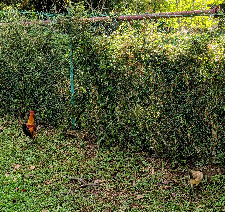 Geocoded, Timestamped Chickens